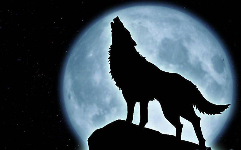 El Lobo